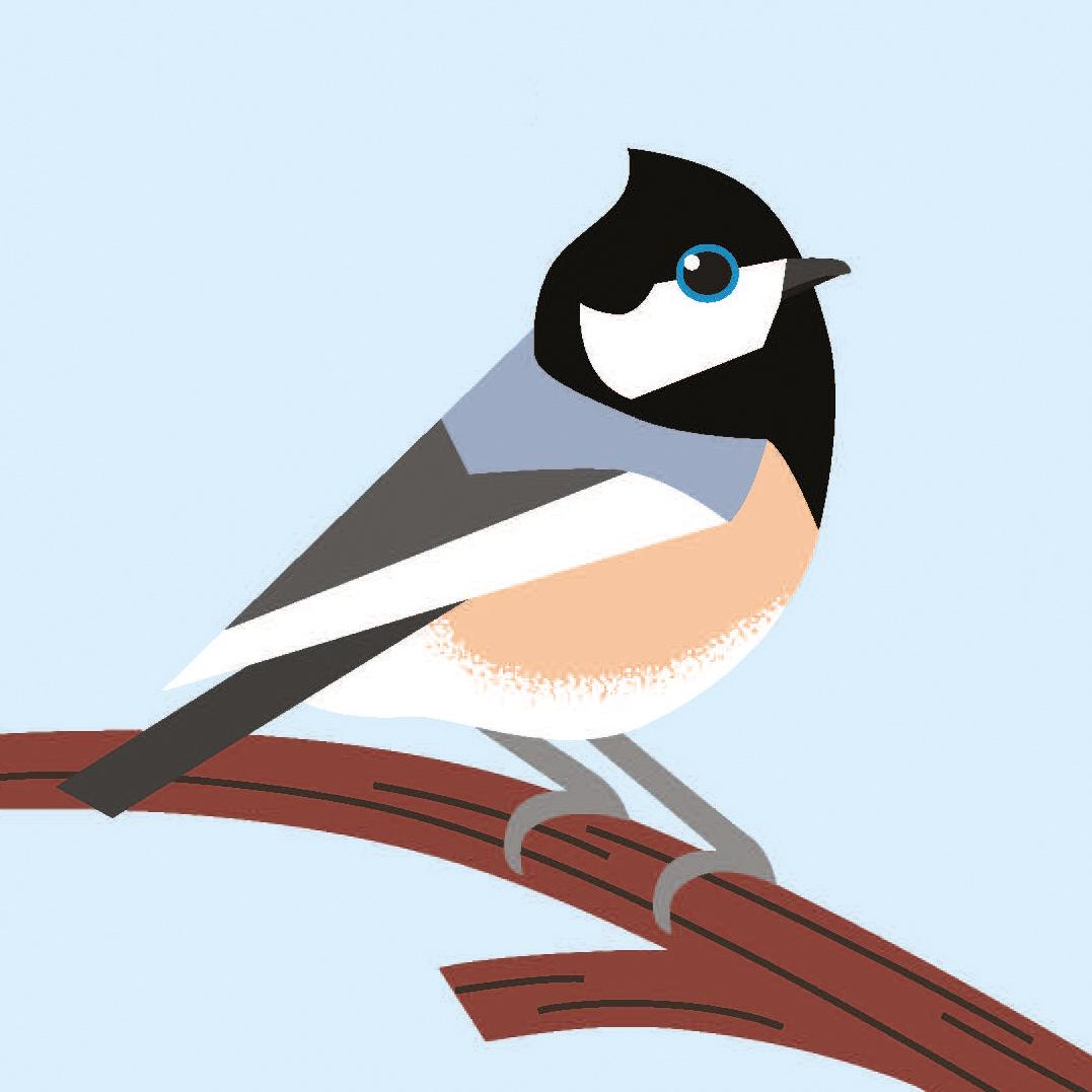 birds_Seite_08