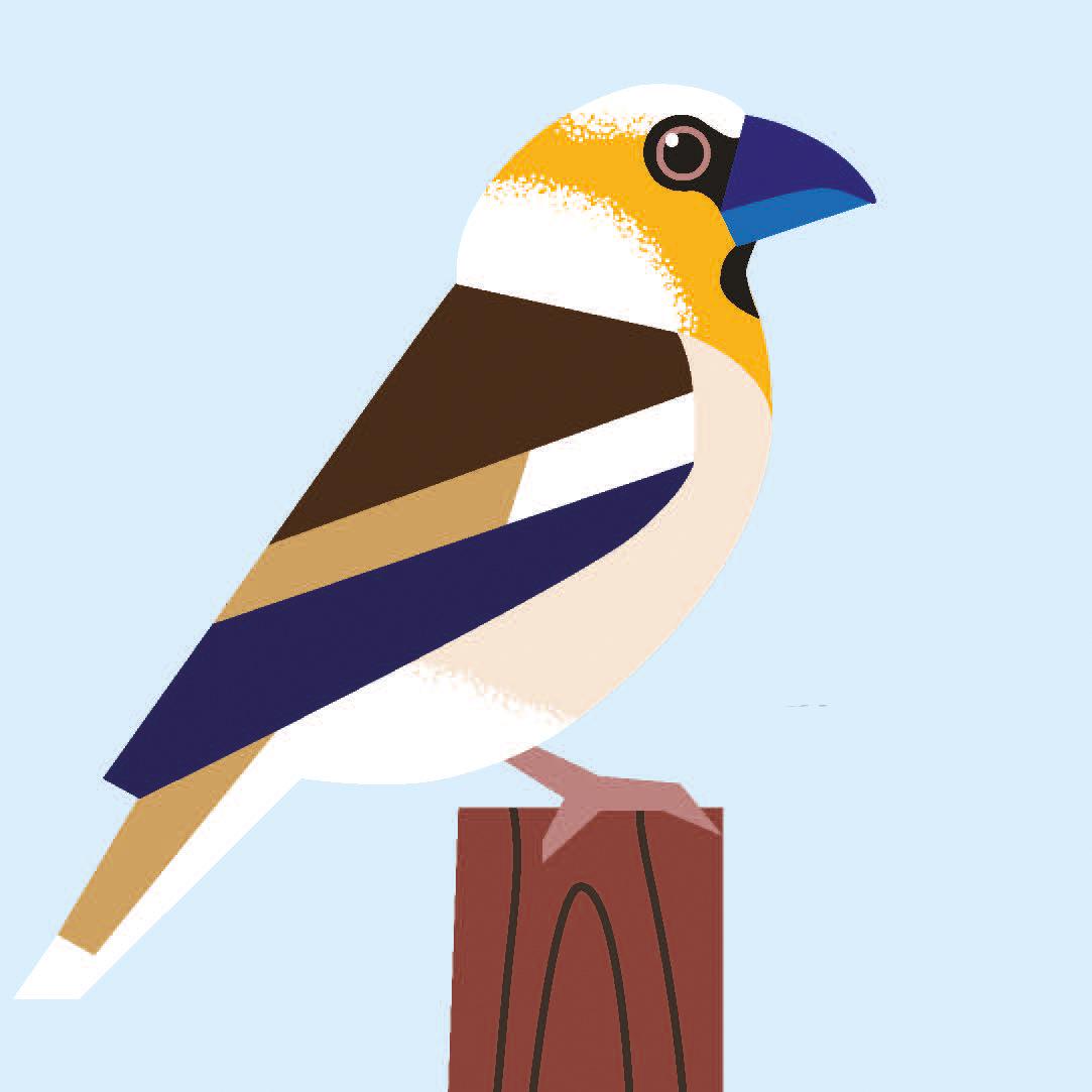 birds_Seite_09