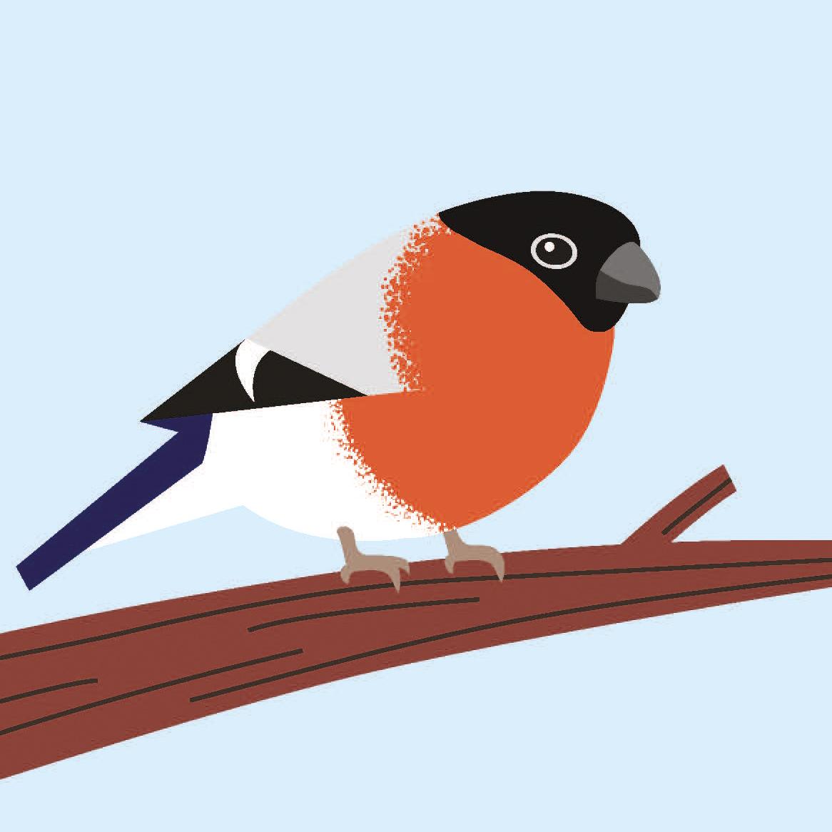 birds_Seite_11