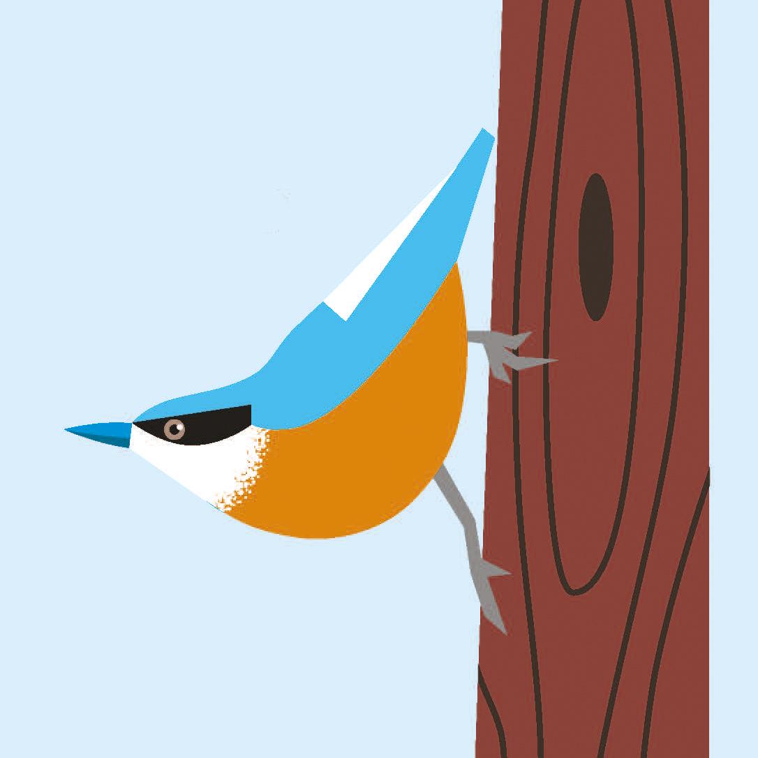 birds_Seite_12